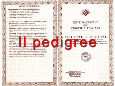 Il pedigree